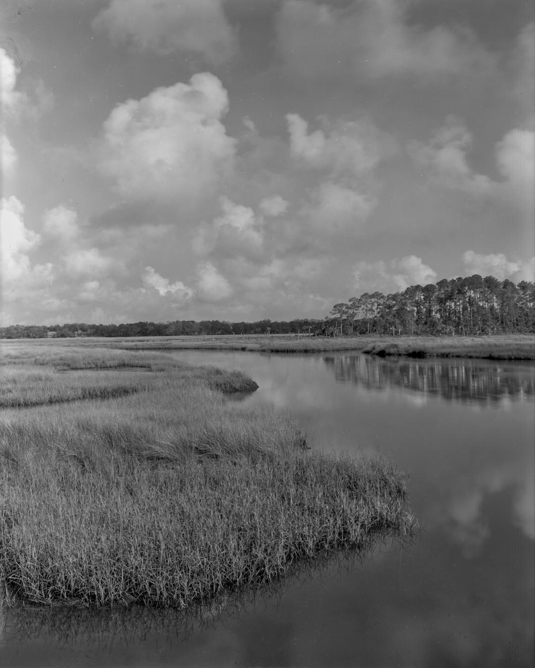 Dutton Island Marsh